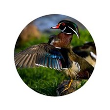 "(12) Wood Duck Wing 3.5"" Button"