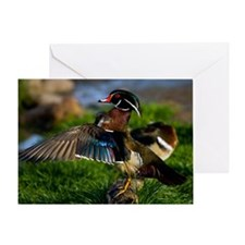 (12) Wood Duck Wing Greeting Card