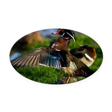 (12) Wood Duck Wing Oval Car Magnet
