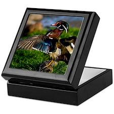 (12) Wood Duck Wing Keepsake Box