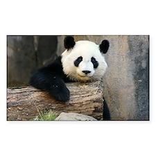 panda3 Decal