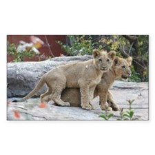 lion cubs Decal