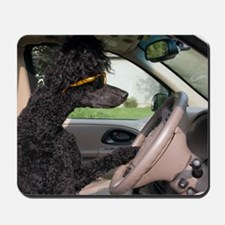 Bella driving cp cards Mousepad