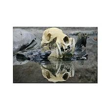 Skull-MP Rectangle Magnet