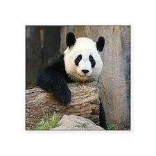 "Panda2-MP Square Sticker 3"" x 3"""