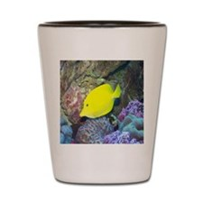Fish2-MP Shot Glass