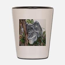 Koala-MP Shot Glass