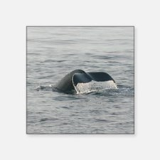 "Humpback-MP Square Sticker 3"" x 3"""