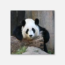 "panda3-MP Square Sticker 3"" x 3"""