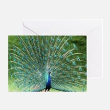 peacock-MP Greeting Card