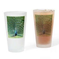 peacock-MP Drinking Glass