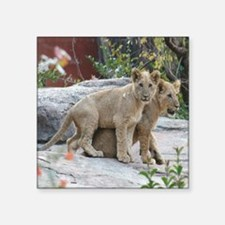 "lion cubs-MP Square Sticker 3"" x 3"""