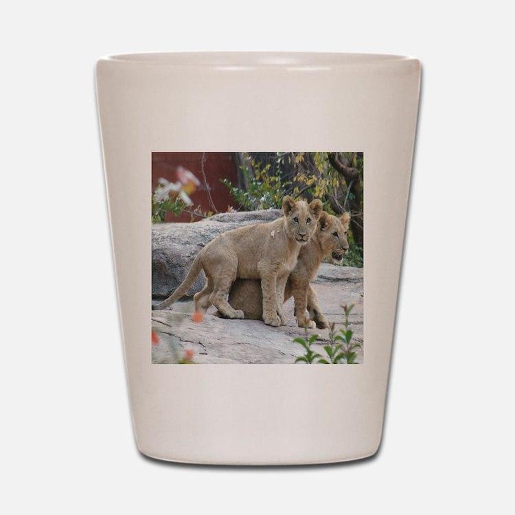 lion cubs-MP Shot Glass