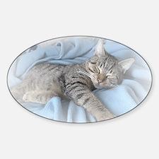 sleepy kitty calendar Sticker (Oval)