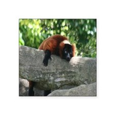 "lemur-Cstr Square Sticker 3"" x 3"""