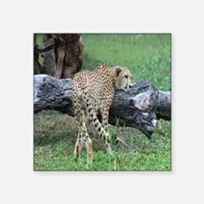 "cheetah-Cstr Square Sticker 3"" x 3"""