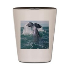 Copy of 1st close up whale!-Cstr Shot Glass
