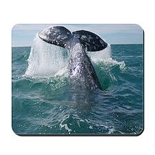Copy of 1st close up whale!-Cstr Mousepad