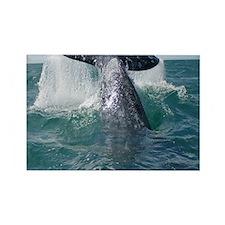 Copy of 1st close up whale!-Cstr Rectangle Magnet