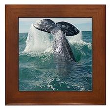 Copy of 1st close up whale!-Cstr Framed Tile