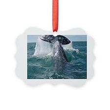 Copy of 1st close up whale!-Cstr Ornament