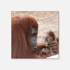 "orang mombaby-cstr Square Sticker 3"" x 3"""