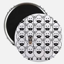 bmSmoothCollieSheep Magnet