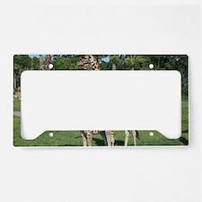 IMG_2530 License Plate Holder