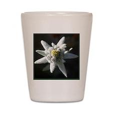 edelweiss flower 1 Shot Glass