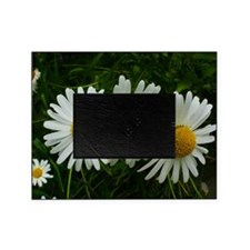 White Daisy Trio Picture Frame