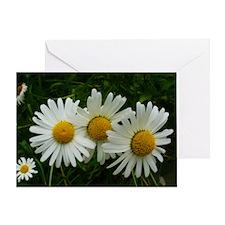 White Daisy Trio Greeting Card