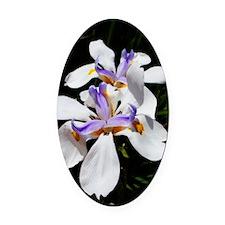 White Blue Orange Lilies Oval Car Magnet