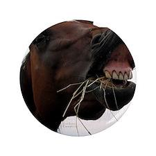 "Hay in Teeth Horse 3.5"" Button"