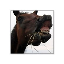 "Hay in Teeth Horse Square Sticker 3"" x 3"""