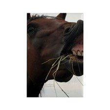 Hay in Teeth Horse Rectangle Magnet