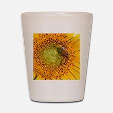 SunflowerBFramedPanelPrint Shot Glass