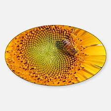 SunflowerBFramedPanelPrint Decal
