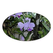 Orquidea Decal