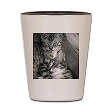 Kitten Pals Shot Glass