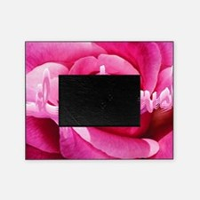 Lil Pink Crush Pink Rose2 Picture Frame