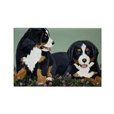 Bernese Pups in Clover Rectangle Magnet