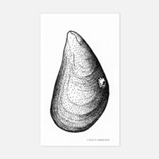 mussel Decal