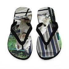 Westiechairect Flip Flops