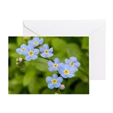 DSCN3394 Greeting Card