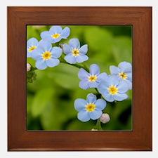 DSCN3394 Framed Tile