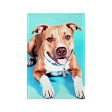 Pit Bull- An American Hero Rectangle Magnet