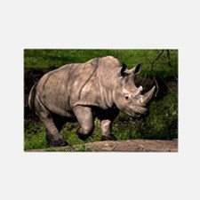 (2) Rhino on Hill Rectangle Magnet