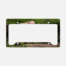 (6) Rhino on Hill License Plate Holder