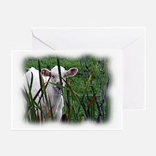 Calf Greeting Cards (Pk of 10)