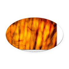GCard_Sunlight on Buddha copy Oval Car Magnet